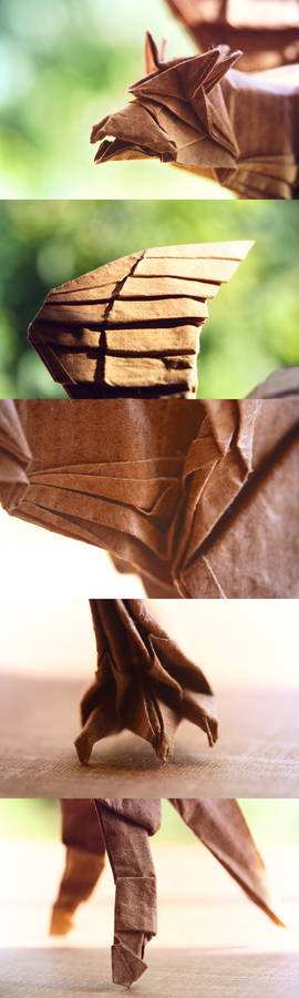Hippogriff close-ups