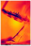 thermal mantis
