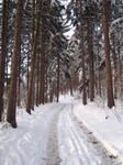 Winter Scape 10