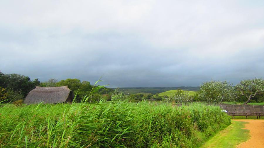Landscape 52