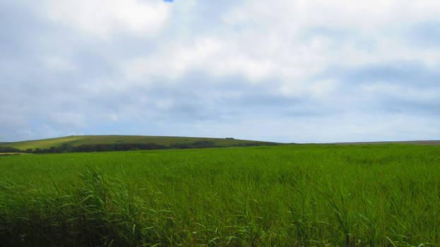 Landscape 53