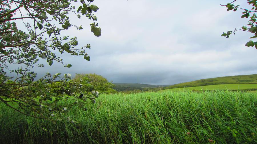 Landscape 54