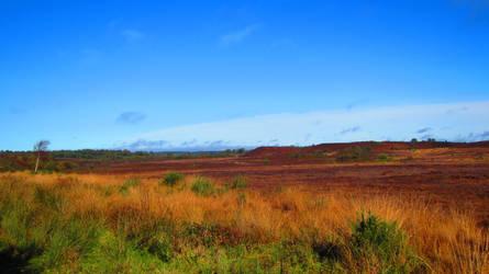 Landscape 70