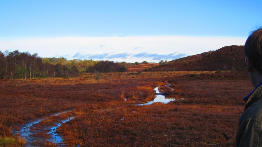 Landscape 62