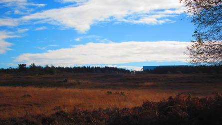 Landscape 71