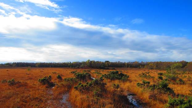 Landscape 73