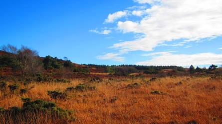 Landscape 74
