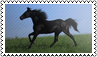Horse colours: black by black-cat16-stamps