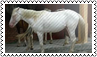 Horse colours: albino by black-cat16-stamps