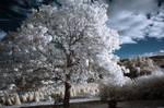 Treeqortweet