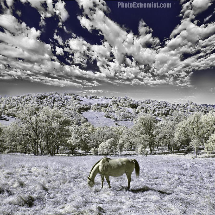 Infrared Horse by Vlue