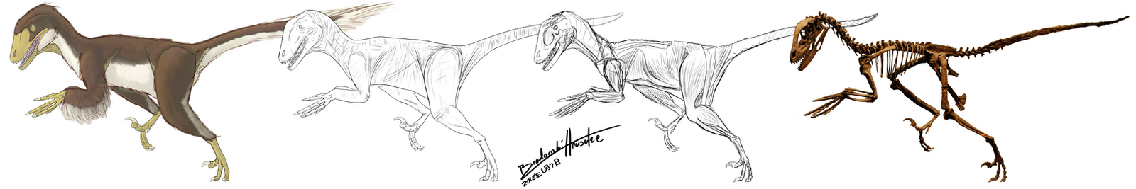 Deinonychus Speculative Full-Body Sketches by BrodorokiHousuke