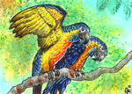 ACEO: Blue-throated Macaws