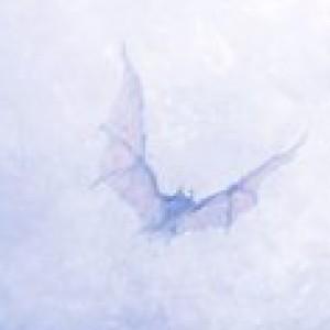 Rodrigod222's Profile Picture