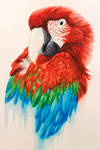 Red Green Blue Macaw