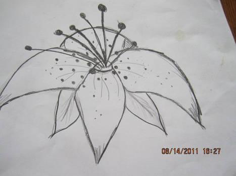 Random Flower sketch