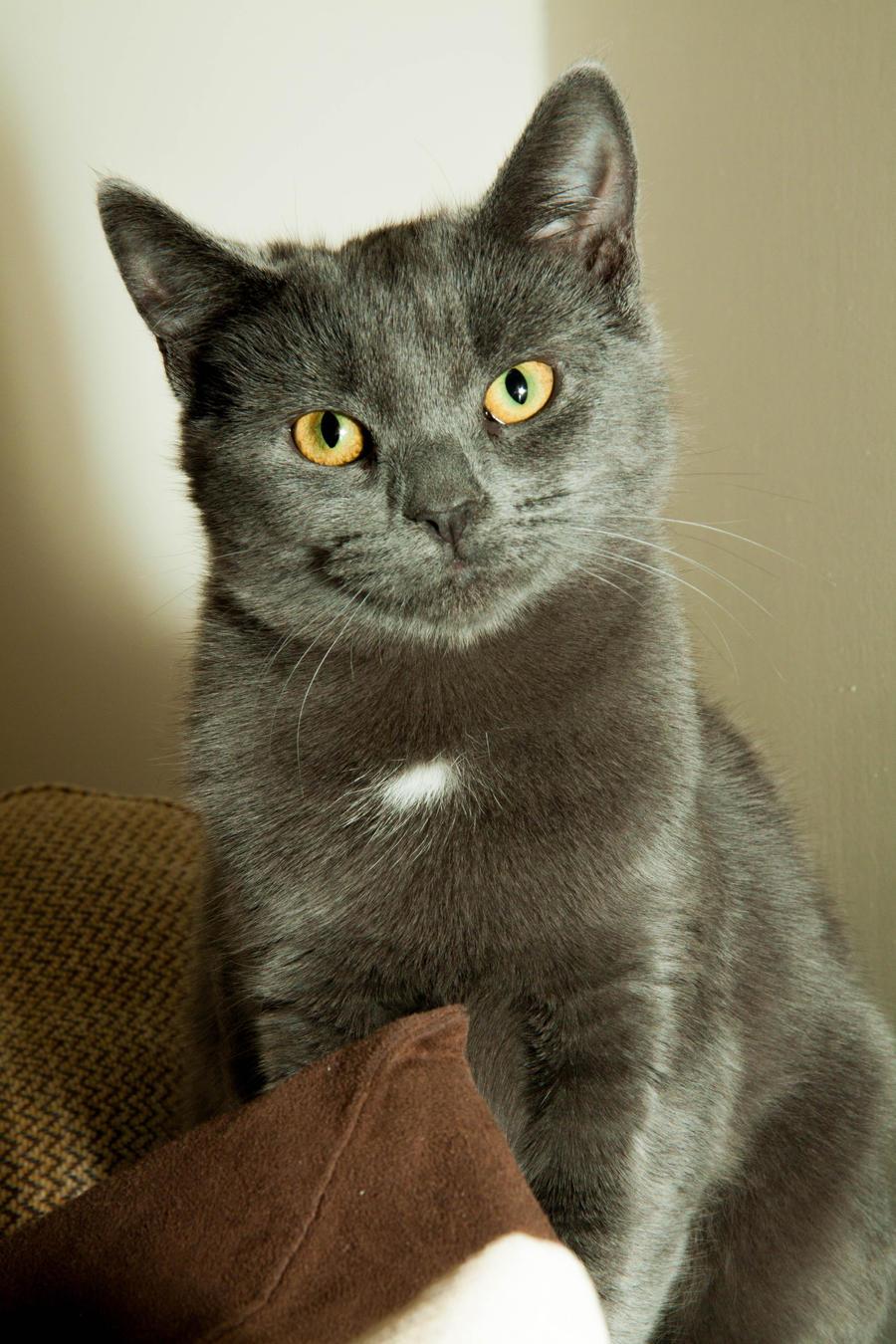 Cat by allenjennison