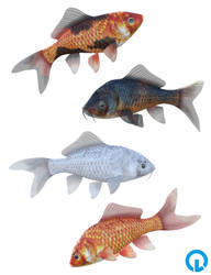 Goldfish Colours