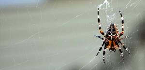 Not-So Itsy Bitsy Spider