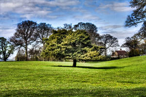 Lone Tree HDR by chilipenguin