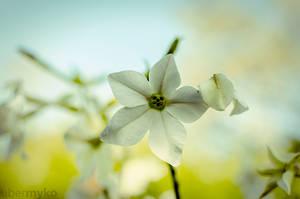 smiling flower by ubermyko