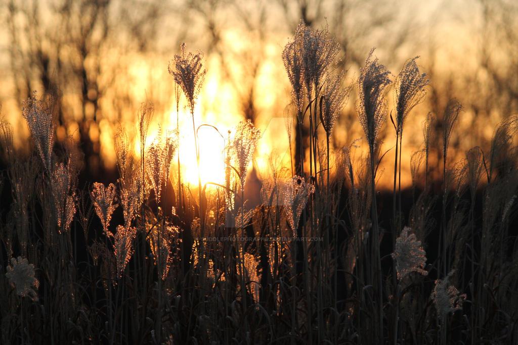 Sunny Winter Day by SuddlePhotographs