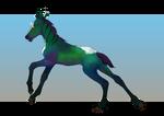 Nagian foal 16