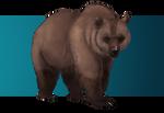 Custom bear 33