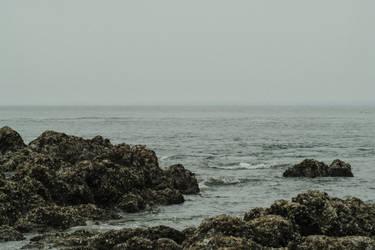 Waves over Barnacled Rocks