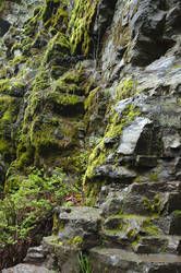 Stone wall with moss