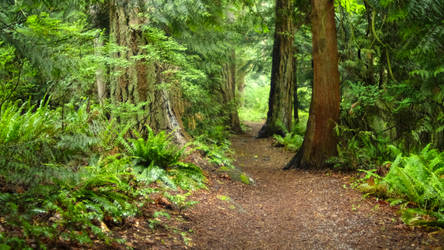 Neighborhood trail to local park