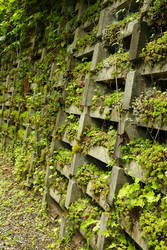 Succulents and Moss growing in a concrete barrier