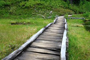 Boardwalk over the marshes near Damifino Lakes