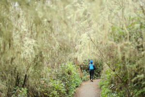 Walking down the path arched with haning moss