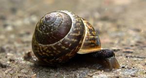 Snailing around