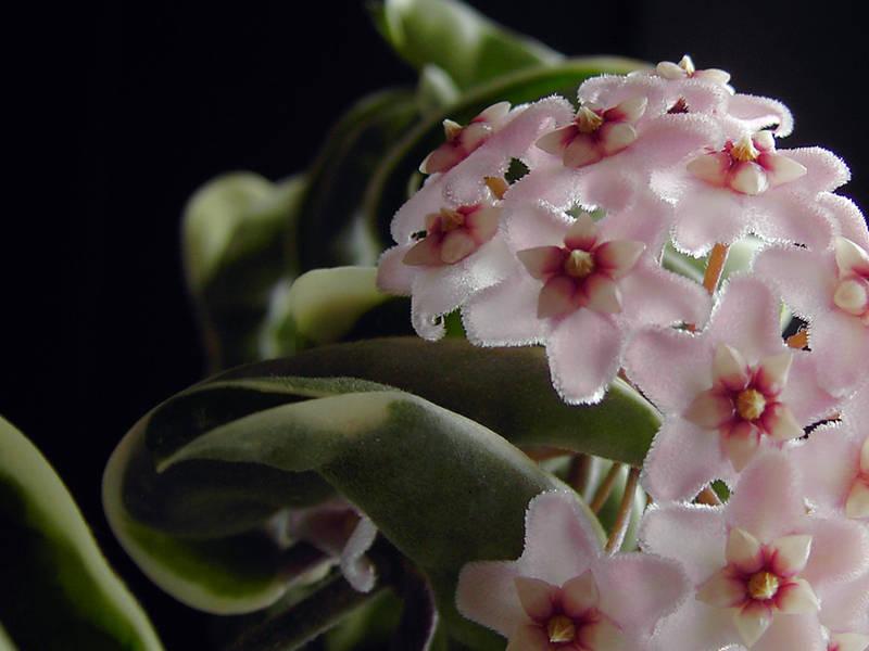 Porcelain flower by Nat0-o