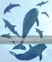 dolphin brushes by abcphotoshop