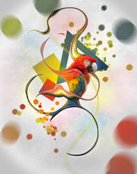 Abstract Birds - Macaw