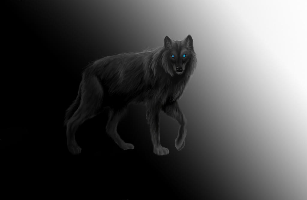 Shadow Wolf Wallpaper