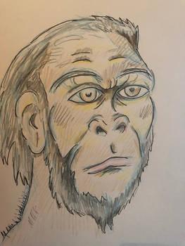 Request by Yahuemi - Homo habilis