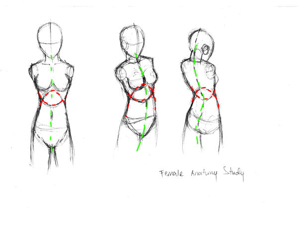 female anatomy study by Joshimaru