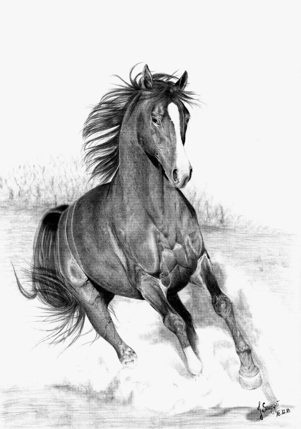 Drawings Pencil of horses running fotos
