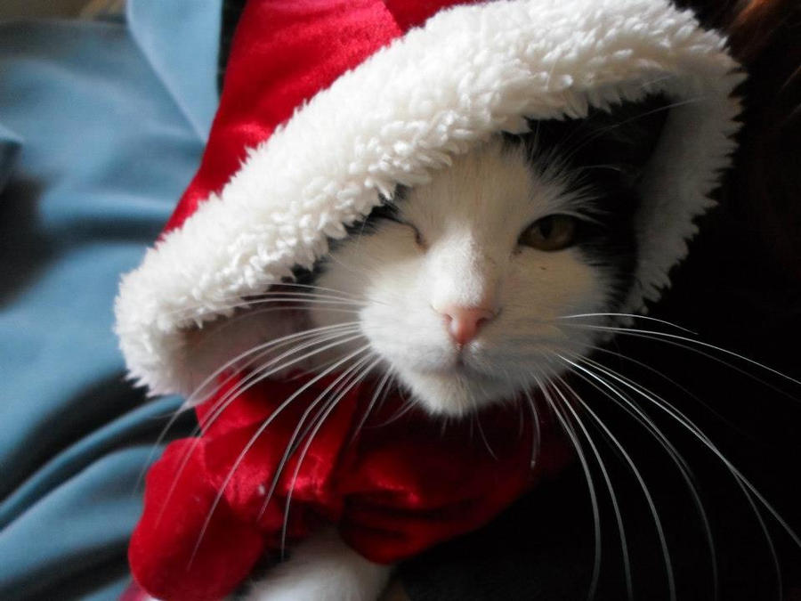 Santa Kitty Wallpapers | Pictures