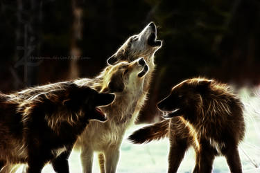 Wolf Pack, Fractal by Hemamm