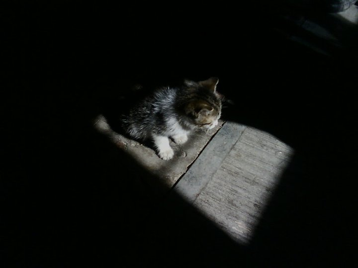 sad cat by Ch0fis on DeviantArt