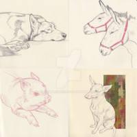 Animal Portrait Commission Samples