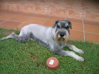 My Dog Peppa by CrimsonVampiress