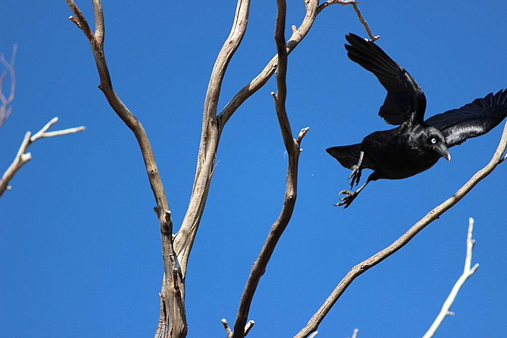 ~Black Feathers, Blue Sky~ by CrimsonVampiress