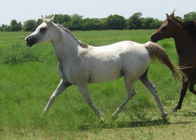 Flowing Trot by equinewoods