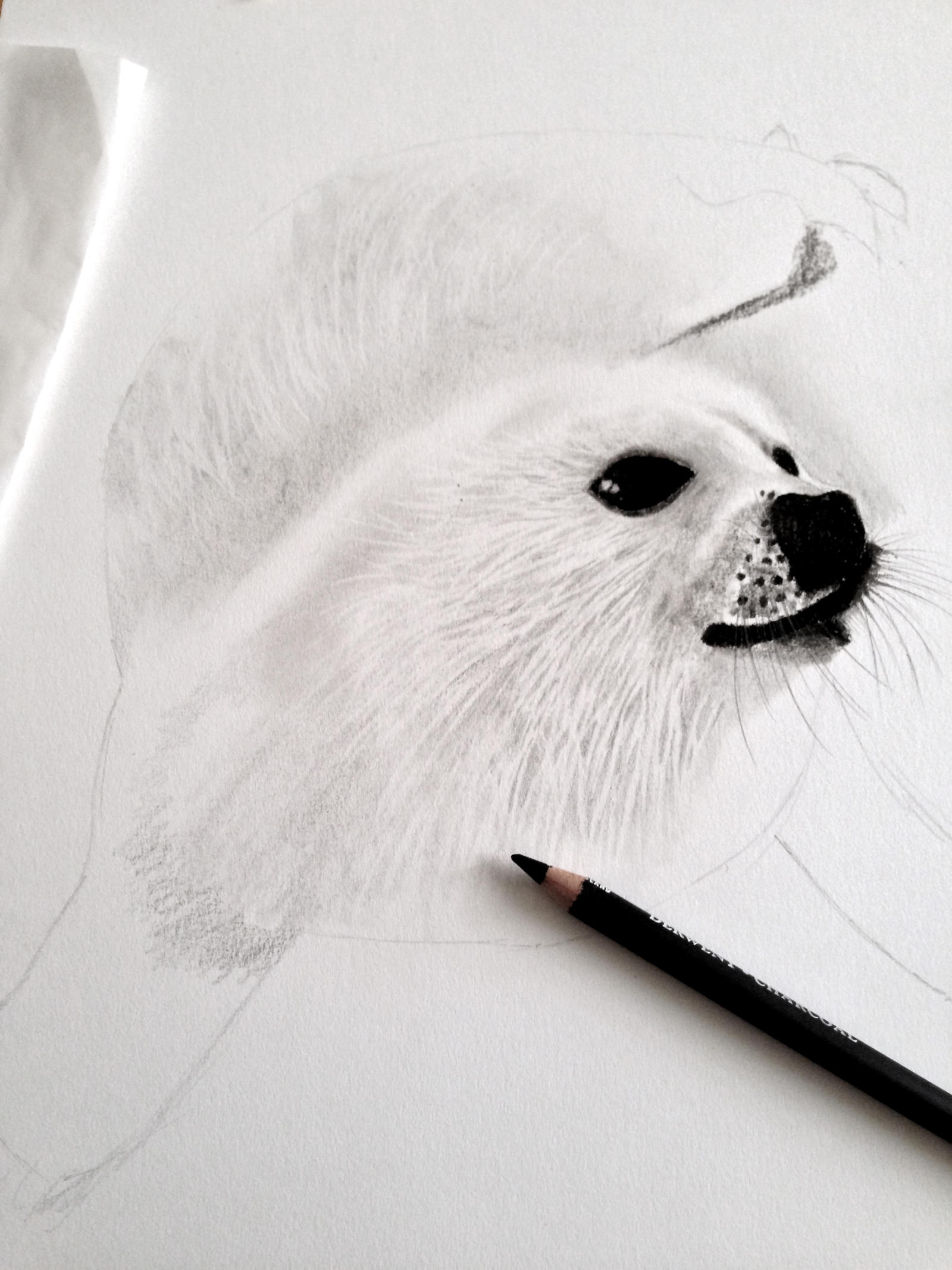 Baby Harp Seal Drawing by BertramYeo on DeviantArt Baby Arctic Seal Drawing